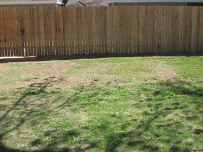 Dead Spot In Our Lawn