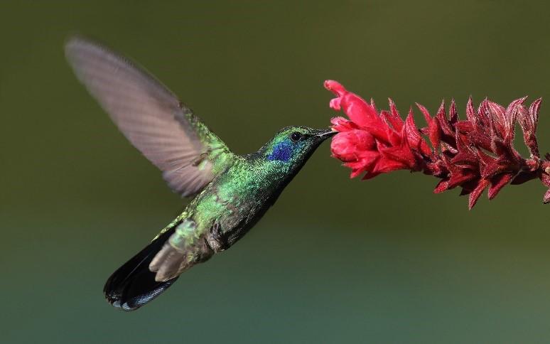 Atraer mariposas, colibríes y otros polinizadores   Suministro de jardinero