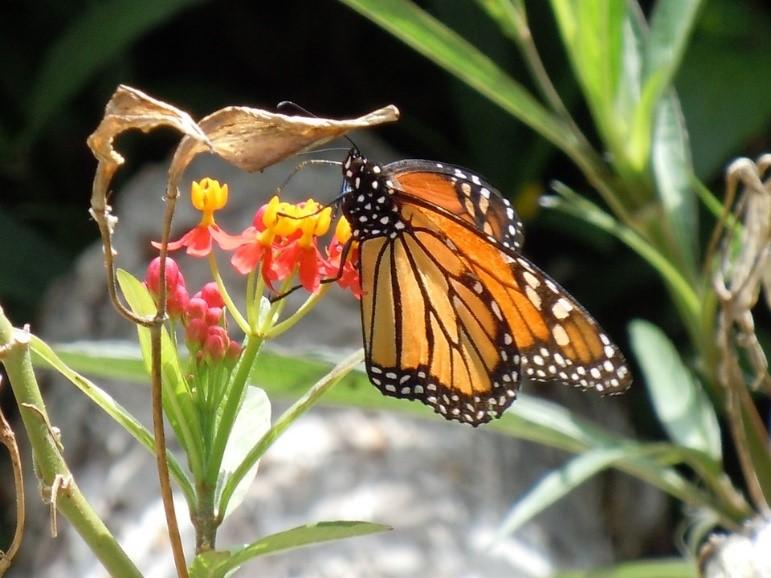 Plantas que atraen a los colibríes | Audubon Arizona