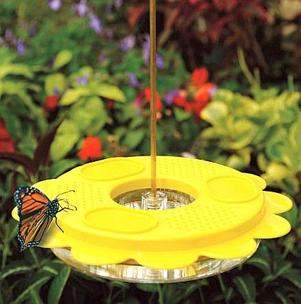 6 Tip For Attracting Hummingbirds Amp Butterflies Double